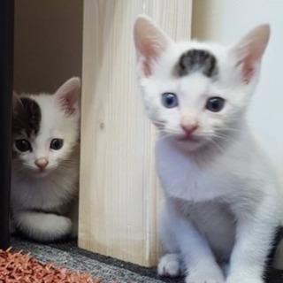 ガレージに産み落とされた兄弟 - 猫
