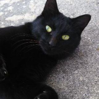 黒猫ちゃんの里親募集