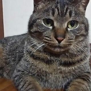成猫。。。だけどチビちゃん