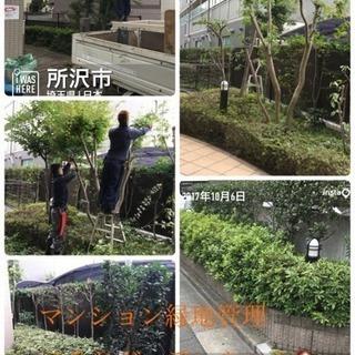 アパート マンションの植栽管理致します 庭の手入れ店【所沢市 狭...