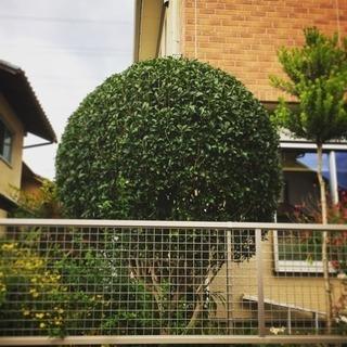 🌿植木の剪定・お庭のお手入れ🌿