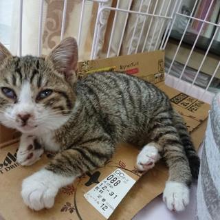 保護猫ちゃんの里親募集します。