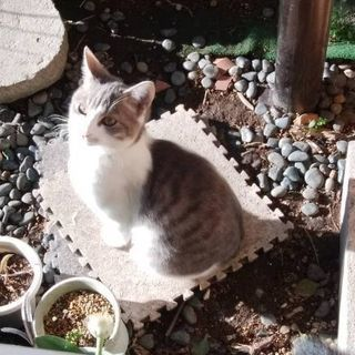 生後二ヶ月半 子猫