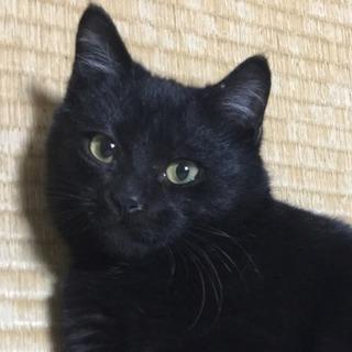 甘えん坊な黒子猫