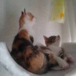 三毛猫女の子(一次休止致します)