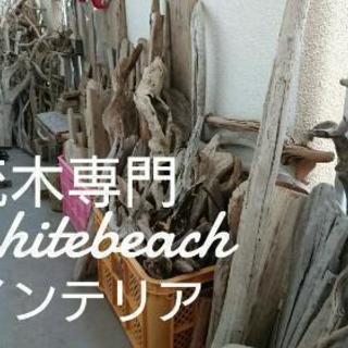 流木インテリア専門  whitebeach薩摩川内