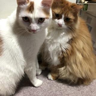 双子の猫ちゃん