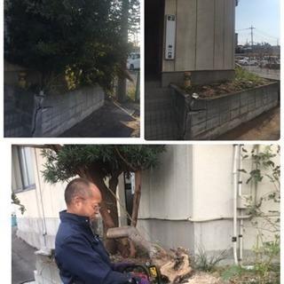 庭木の伐採致します 庭の手入れ店【所沢市 入間市飯能市狭山市さい...