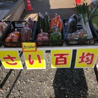 野菜販売100円市♪