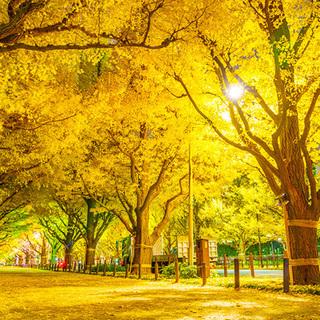 12月2日(日) 期間限定!秋の絶景!まるで絵画!都内屈指の黄金...