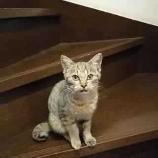 甘えん坊の3ヶ月の子猫♀ 里親募集