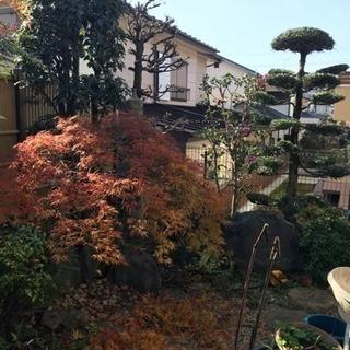 お安くお庭を綺麗に致しますm(_ _)m