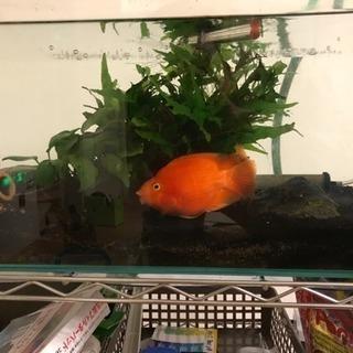 熱帯魚 60cm水槽 外部フィルター