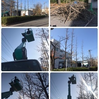 高木剪定 伐採致します 庭の手入れ店【所沢市 川越市さいたま市入...