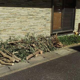 🎄植木 💮造園 世田谷 目黒🌸庭の手入れ ✂剪定 刈込 除草
