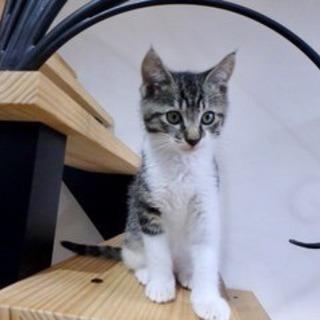 オス猫ミニコ君 2ヶ月
