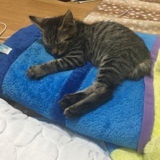 生後5ヶ月オス猫
