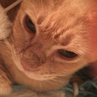 【急募!!(><)】2歳 優しい猫 オス