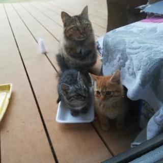 子猫 2匹捕獲