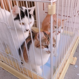 三毛猫♀、白黒♀ - 須崎市