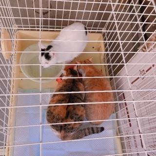 三毛猫♀、白黒♀
