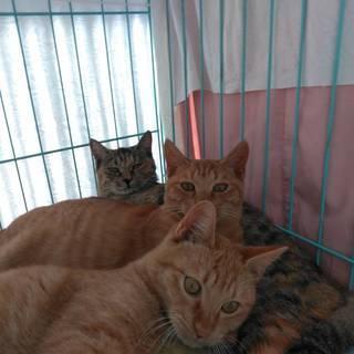 里親募集 猫ちゃん 3兄弟