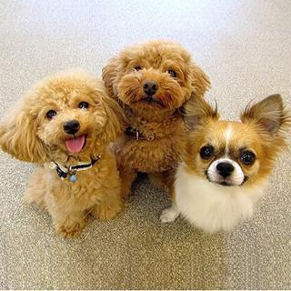 ■小型犬■一時預かり20%Off♪