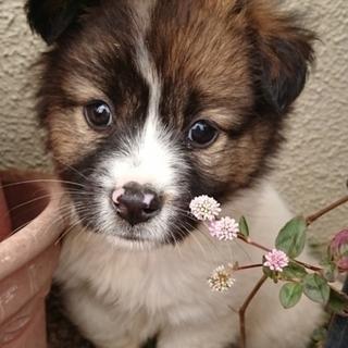 【保健所引き出し】モフモフでとても可愛い子犬です❣️① メス雑種