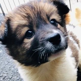 【保健所引き出し】モフモフでとても可愛い子犬です❣️② メス雑種