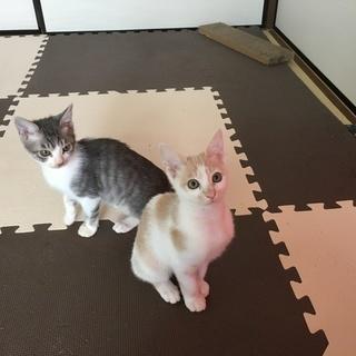 2匹の子猫の里親募集です