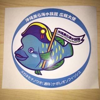 沖縄 美ら海 水族館♪ナポレオンフィッシュ 大シール ステッカー