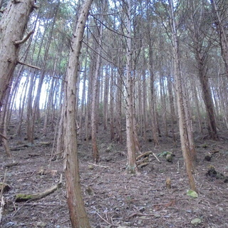 山林売ります。安価で地主に!! 8,208㎡ 約2,483坪