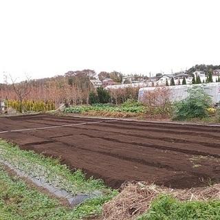 初心者も大歓迎!広めな区画の畑をお貸しします♪ (貸し畑/貸し農...