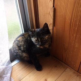 可愛い子猫です 生後2か月~3か月
