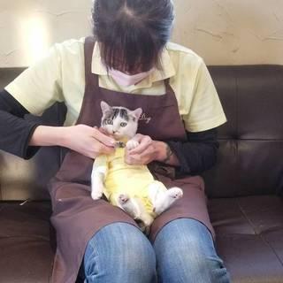 ☆ 猫の爪切り講座 ☆