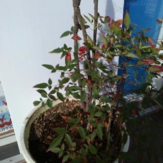 観葉植物(種類がわかりません)