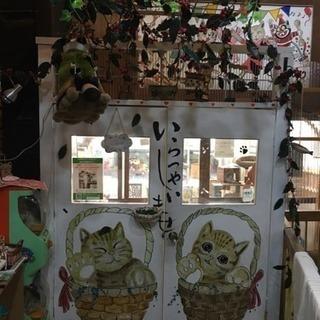 愛知県  猫カフェ クリスマスイベント