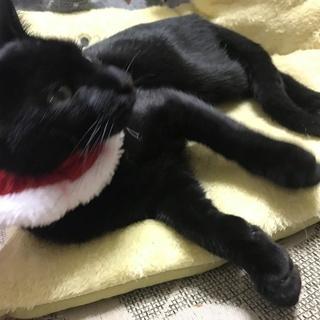 生後5~6か月位の黒猫さん。男の子です。