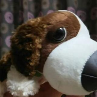 The Dog⑤