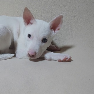 可愛い仔犬バイオレットちゃんが幸せを運びます。