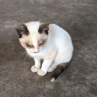 3匹目の仔猫、名前はフー、♀です。 女の子とは思えない勝気な子です...