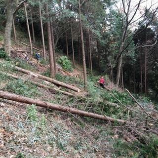 山の仕事(急募)木こり作業‼︎素人大歓迎です。男女問わず募集