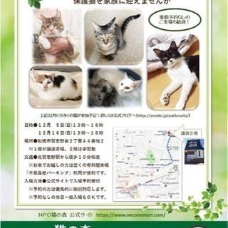 <保護猫>猫の森ふれあい譲渡会<里親>