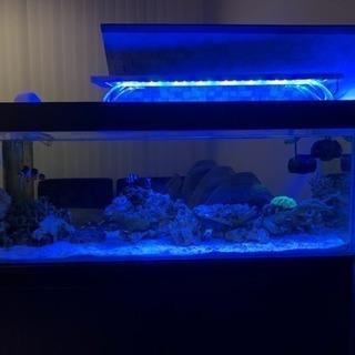 熱帯魚 海水魚 ライブロック