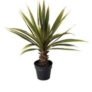 人工観葉植物 アソシア