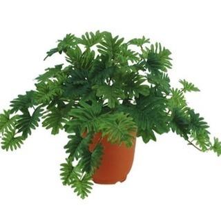 人工観葉植物 セロームブッシュ
