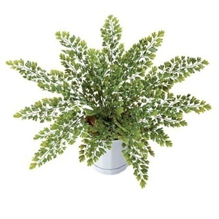 人工観葉植物 アジアンタムブッシュ
