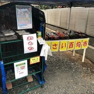 新鮮野菜100円市場ლ(^o^ლ)