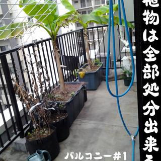 大阪のど真ん中なのにガーデニングの出来るシェアアパート?!