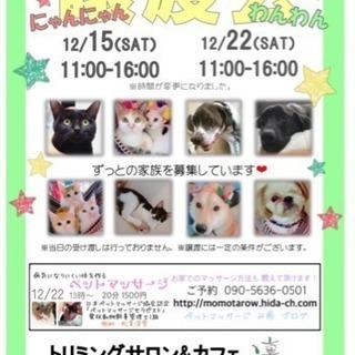 12/15、12/22 わんにゃん譲渡会